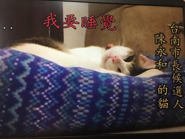 無黨籍台南市長參選人陳永和的愛貓「Ruby」加入拉票。圖/取自陳永和臉書