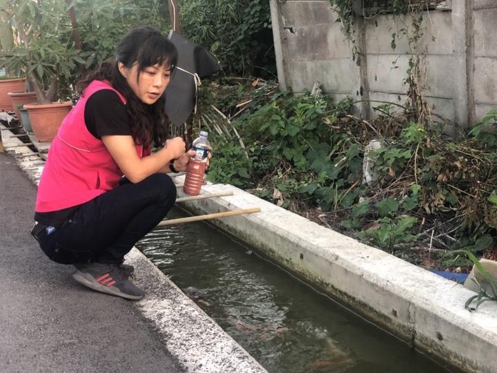埔鹽鄉民代表會主席許文萍在三省村打造一條生態灌溉渠,有空就到渠邊餵魚。照片/許文萍提供