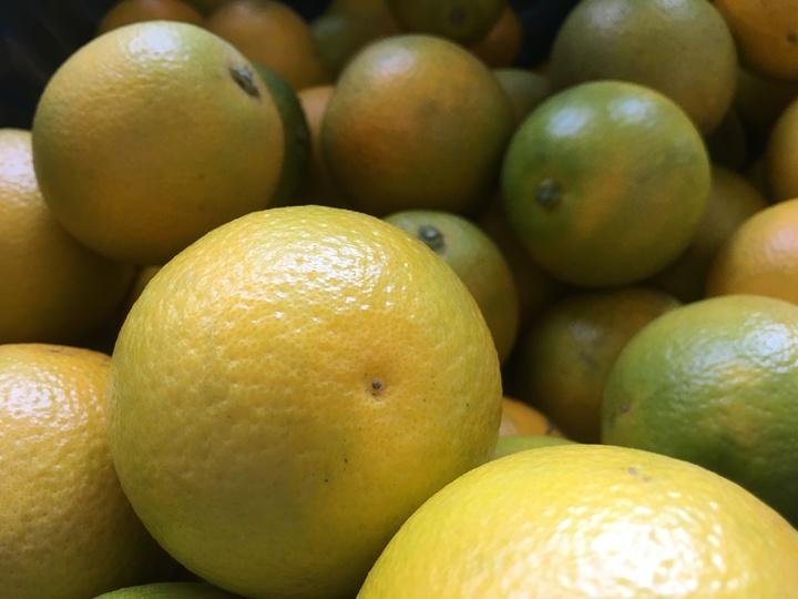 雲林縣柳丁進入盛產季節,今年柳丁品質不受氣候影響,甜度高、甜酸比適中,口感清爽、果肉細緻,且價格實惠,現在品嘗正是時候。記者陳雅玲/攝影