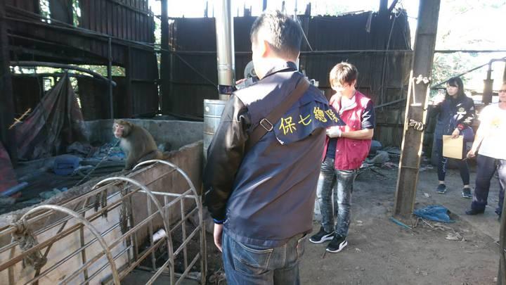 警方接獲報案,台灣獼猴遭人養在豬圈旁10多年。記者蕭雅娟/翻攝