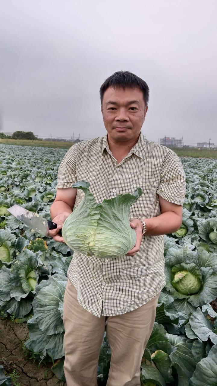 高思博到新市區高麗菜園助割,瞭解盛產價格崩盤現況。圖/高思博服務處提供