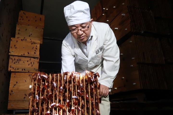 中國四川好醫生藥業集團職員向記者展示該公司在四川省西昌市「蟑螂農場」內的蟑螂巢穴,這些蟑螂事後會經過處理,被製成中藥產品。部分中企認為蟑螂有利可圖,可用於消滅堆積如山的廚餘和堆肥、製成牲口的營養飼料及消滅常見小病的藥材。路透