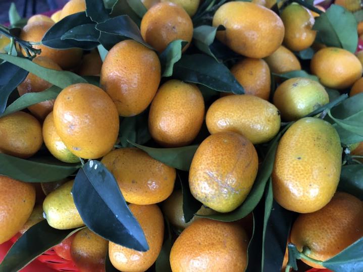 近年來金柑(金棗)走向精緻化,果實變大、甜度也變高,將是未來發展新趨勢。 圖/縣府提供