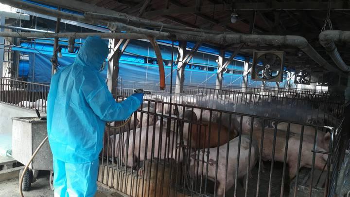 彰化縣政府今天成立非洲豬瘟緊急應變中心,除分區擴大辦理4場非洲豬瘟強化宣導講習,也輔導養豬戶全面消毒。照片/彰化縣動物防疫所提供