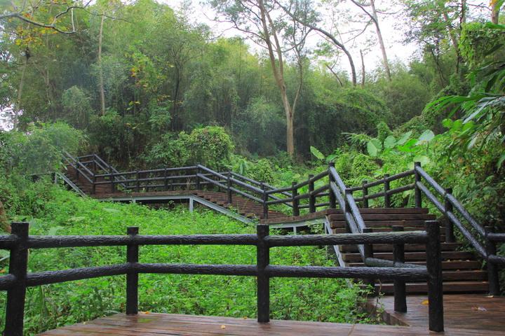 思源亭附近的木棧道,上往下走約600公尺,沿途植栽茂密,相當清幽。記者郭政芬/攝影