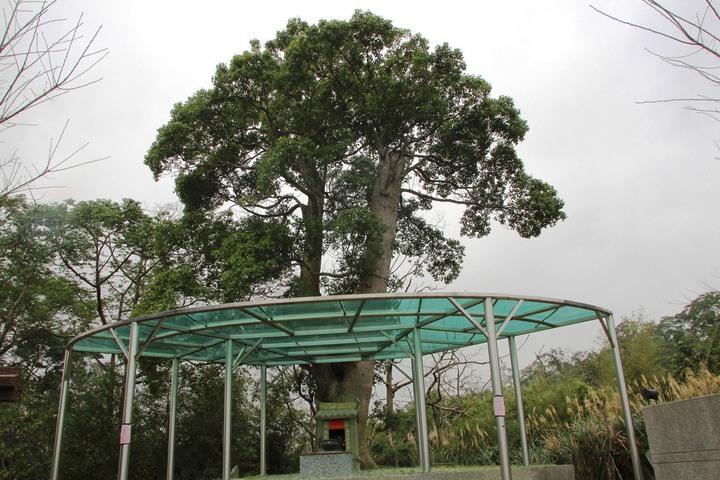 寶二水庫管理中心中心旁的土地公廟及大樟樹分別在民國96年及94年,從寶二水庫淹沒區遷移過來的。記者陳斯穎/攝影
