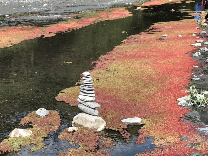 南投縣武界部落位在濁水溪上游,冬季枯水期水生蕨類植物布滿水面,呈現紅、橘、綠等鮮豔色彩,被譽為上帝的調色盤。記者江良誠/攝影