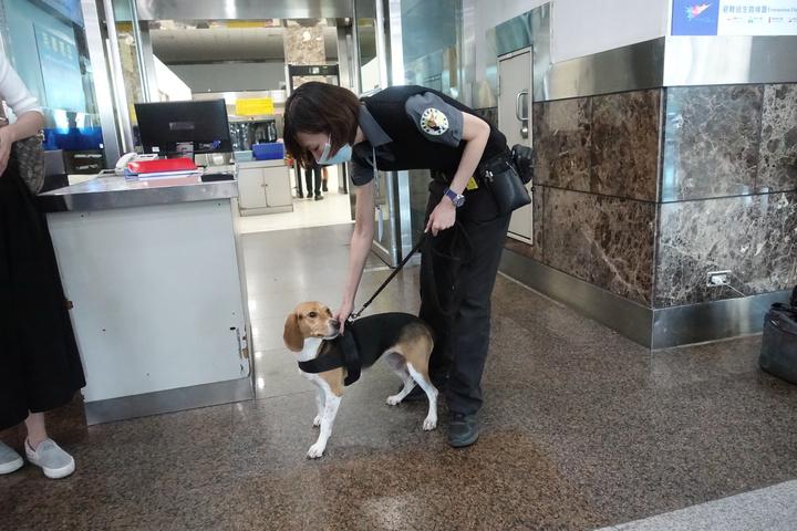 被踢的檢疫犬Jenna與領犬員。記者劉星君/攝影