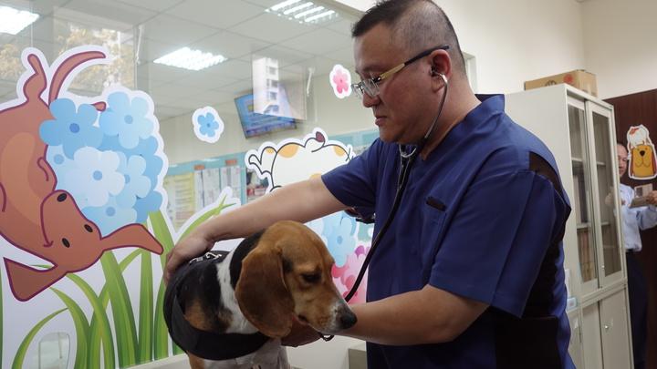 高市獸醫師公會理事長高振庸今下午對檢疫犬Jenna健康檢查,雖然Jenna的外觀沒有外傷,但Jenna變得更敏感,推測心理受到影響,建議牠休息3到5天後再繼續執勤。記者劉星君/攝影