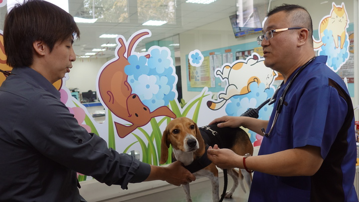 高市獸醫師公會理事長高振庸(右)今下午對檢疫犬Jenna健康檢查,雖然Jenna的外觀沒有外傷,但Jenna變得更敏感,推測心理受到影響,建議休息3到5天後再繼續執勤。記者劉星君/攝影