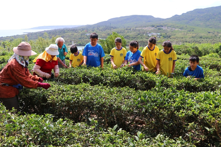 探究高山茶還是平地茶好喝?台南市一群小學師生跨200多公里,從台南追追追來到國境之南的屏東滿州鄉,深入認識「港口茶」產製過程。圖/南大附小彩虹斑馬志工隊提供
