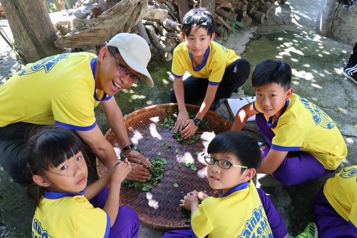 師生們開心搓揉著茶葉體驗。圖/南大附小彩虹斑馬志工隊提供