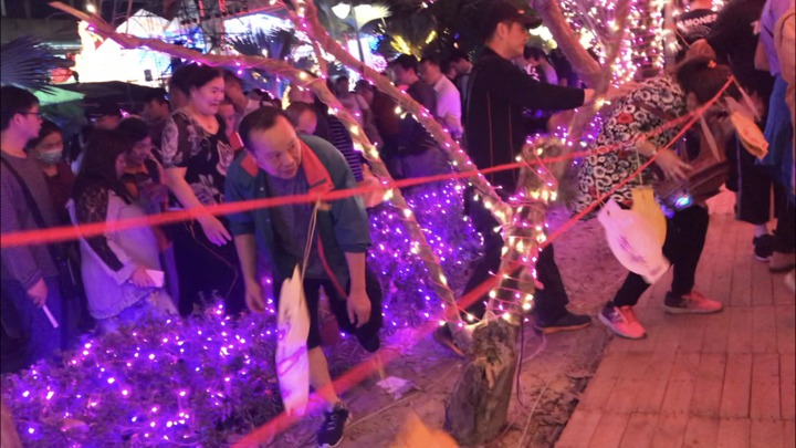 台灣燈會開幕接近點主燈點燈,民眾陸續從主舞台區往外圍移動,卻因不耐走到走道出口,直接踏過樹叢及燈飾,甚至開出一條路來。圖/讀者提供