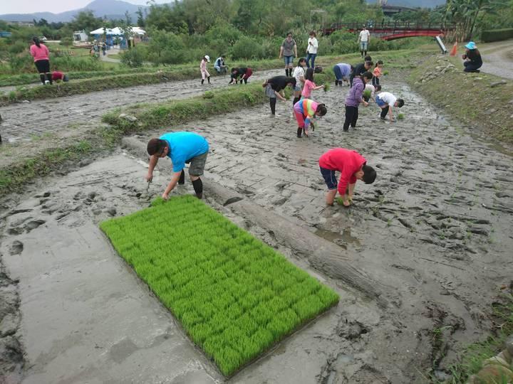 邁入第20年的宜蘭綠色博覽會,本月30日到5月12日要在冬山河生態綠舟登場,今天下田插秧。記者羅建旺/攝影