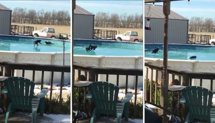 美國奧克拉荷馬州,有一對黑貓兄弟,在自家結冰的游泳池上玩耍,笨拙可愛的樣子,全被在屋內的飼主給偷偷拍攝下來。圖片擷取 美聯社/Caters TV