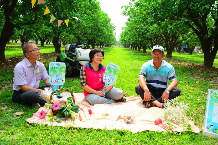 台南麻豆文旦園美得可以野餐露營。記者吳淑玲/攝影