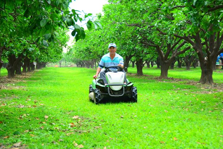 台南麻豆文旦果園相當專業化的管理。記者吳淑玲/攝影