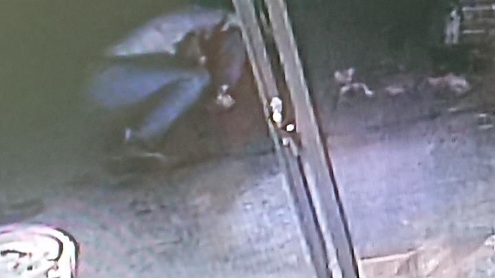 陳男被刺傷後倒在檳榔攤外。 記者卜敏正/翻攝