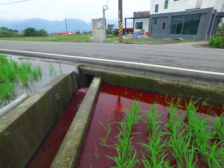 受污染農田近照,田水被廢水染紅。圖/宜蘭縣環保局提供