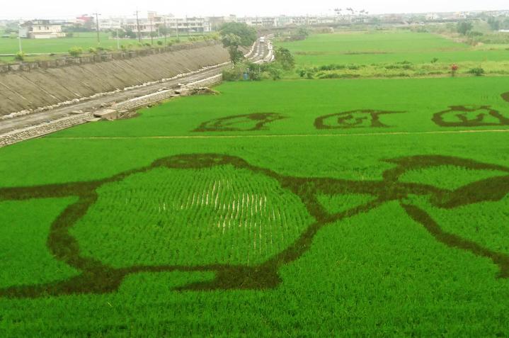 宜蘭稻田裡的「動物狂歡節」登場了,今年在壯圍鄉中央橋下的綠油油秧田裡,「長」出一群企鵝家族,巨大但可愛。記者羅建旺/攝影