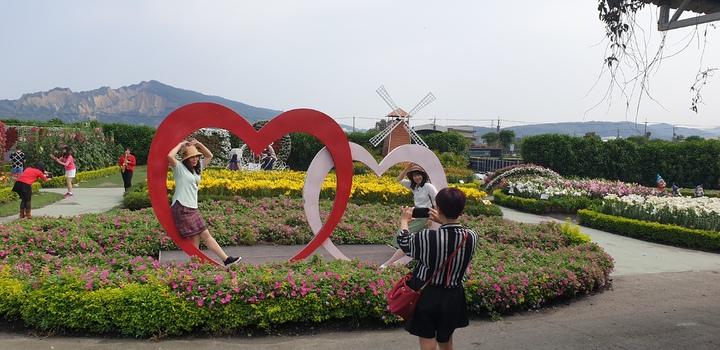 中社觀光花市百合花季今天展開。記者游振昇/攝影