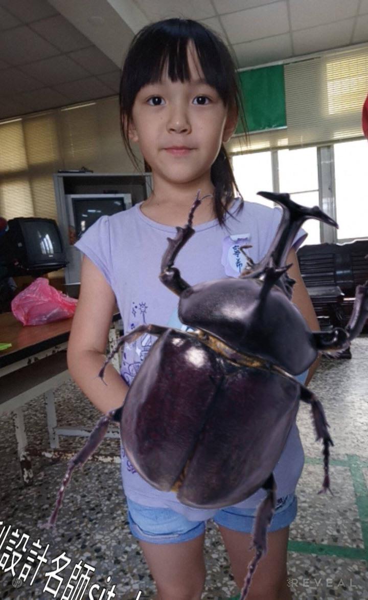 台南佳里漳洲社區結合VR虛擬實境,讓小朋友好像抱著超大隻的獨角仙。圖/漳洲社區提供