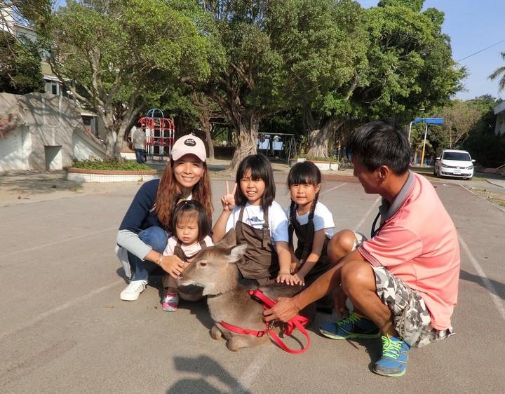 打造如日本奈良公園,台南佳里漳社區小鹿是社區小旅行最受遊客歡迎的。圖/漳洲社區提供