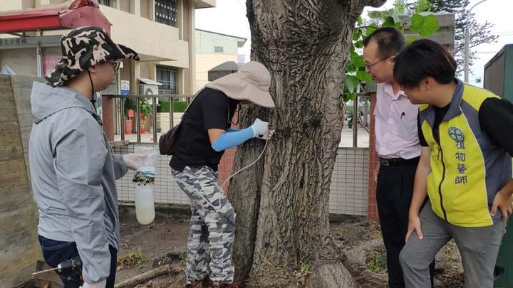 莿桐鄉長林靖焜(右二)到場關心百年老刺桐樹病害防治。記者李京昇/攝影