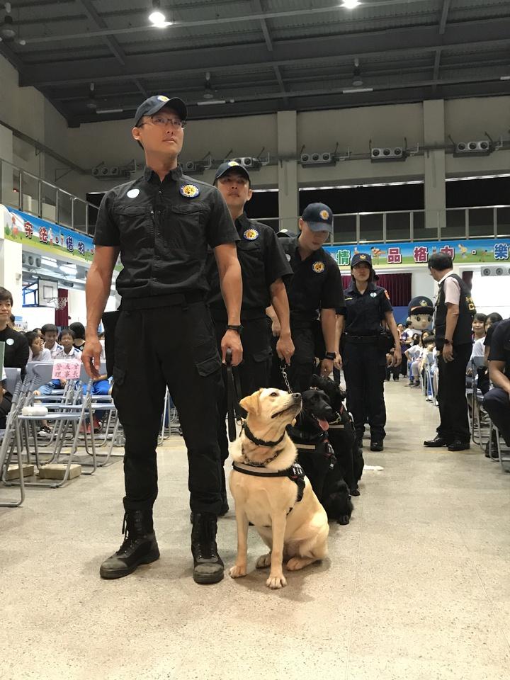 台中市警察局警犬隊五隻警犬訓練有素,穩定性高。記者林佩均/攝影