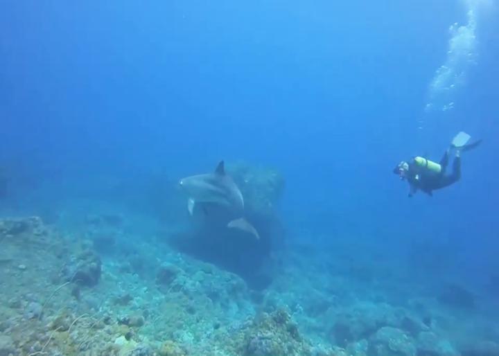 日前有一團潛水客在綠島石朗海域潛水時,意外有尾瓶鼻海豚伴游近20分鐘,影片PO上網,網友紛紛稱羨。圖/庫達潛水教練蝦卷