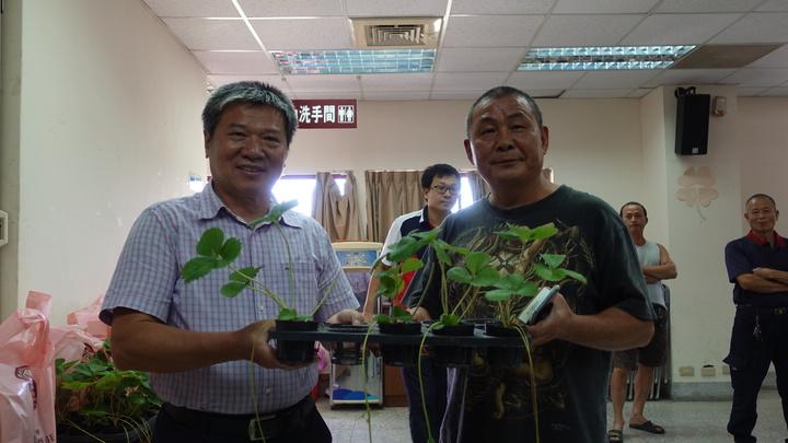 大湖地區農會舉行授權儀式後,將150株「戀香」品種,發給產銷班農民。記者劉星君/攝影