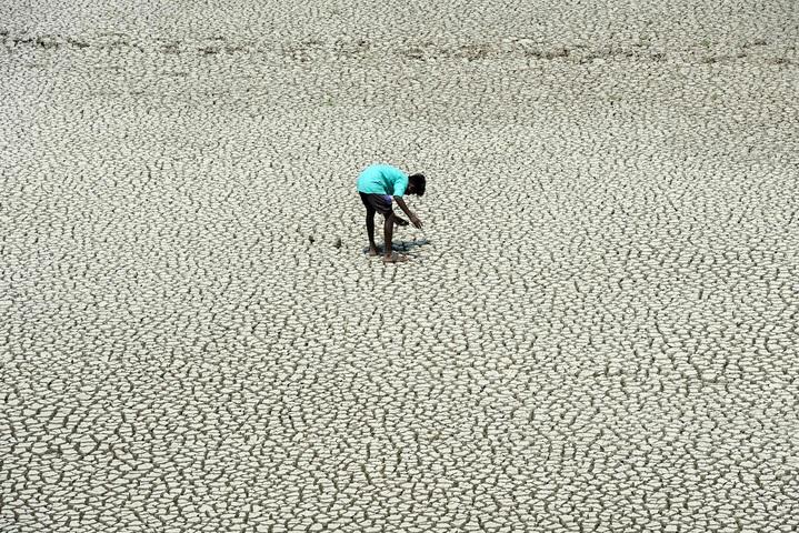 一名印度童子軍5月21日走在市郊已乾涸的Chembarambakkam湖床尋找泥蟹與蛇頭魚。包含Chembarambakkam湖的清奈傳統4大水庫已接近全面乾涸,民生用水極度短缺。法新社