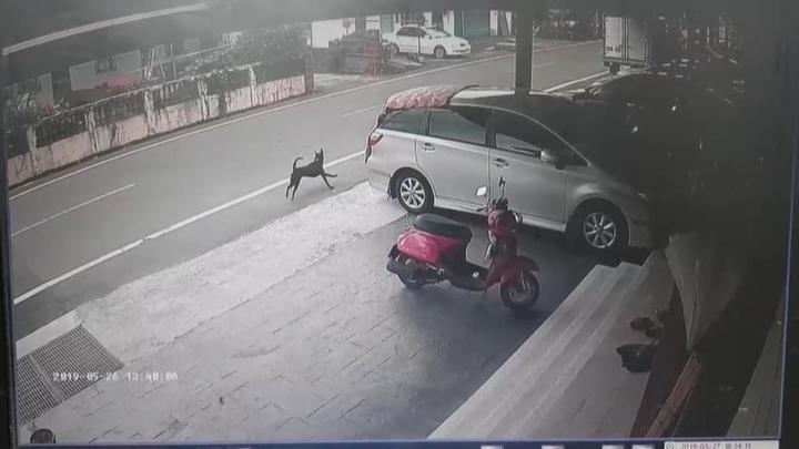 事發後,黑狗逃離,至今也都還未找到狗兇手,黑狗攻擊事件,讓附近居民與過往學生心有餘悸,不知黑狗何時還會再出現?相互提醒要小心。圖/翻攝畫面