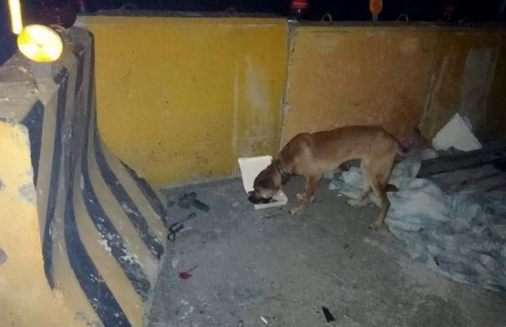 台灣動物緊急救援小組昨天上午由大隊長倪兆成帶領獸醫師及數名志工,從高雄出發,直奔台東多良火車站附近救一隻受傷的狗。圖/台灣動物緊急救援小組提供