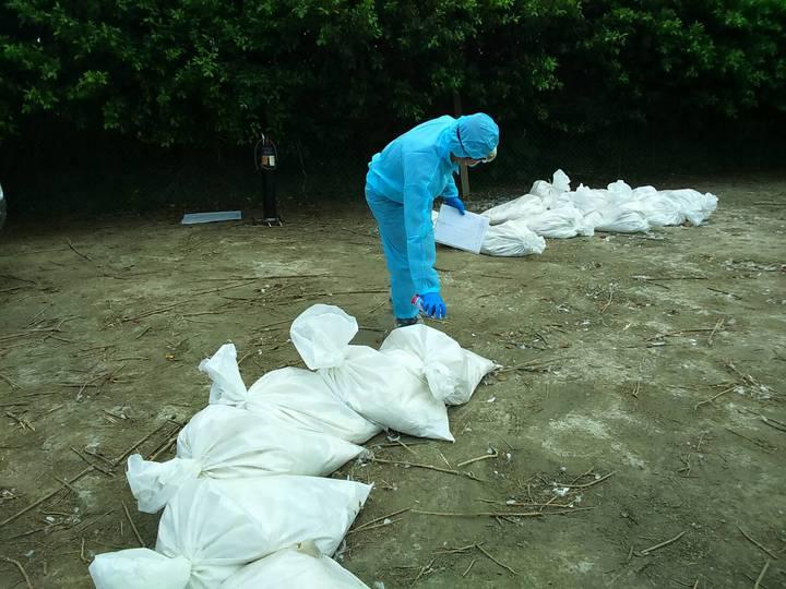 芳苑一處鄉肉鴨場確診為感染H5N2亞型高病原性禽流感病毒,今天完成全場撲殺清場及消毒工作。圖/彰化動防所提供