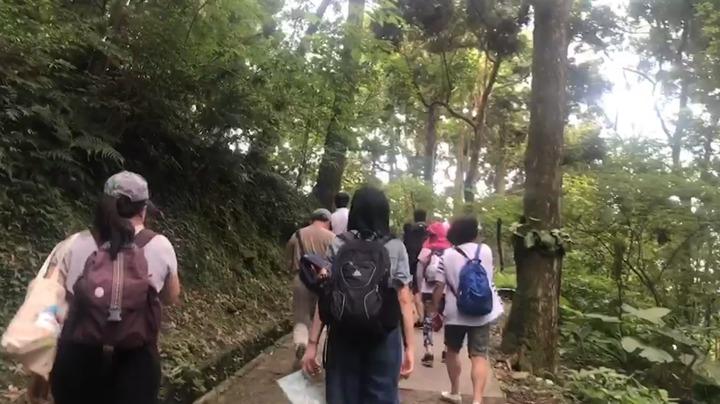 一年一度的東眼山國家森林遊樂園區「回森林家」活動,今年六月一連兩周擴大舉辦。記者侯俐安/攝影