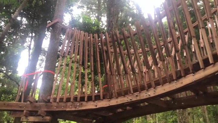 淡江大學建築系老師郭恩愷帶著十名學生,駐地利用台灣國產柳杉為材料,在景觀步道沿線的柳杉人工林區域,建置觀景台,讓人看見國產材木構建築的可能性。記者侯俐安/攝影