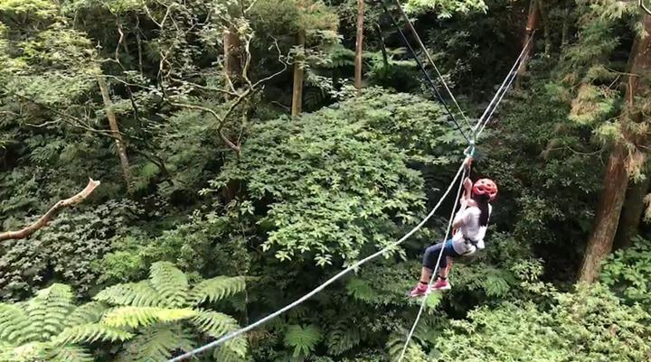 東眼山國家森林遊樂園區「回森林家」活動,希望透過主題推廣多面向的森林,也讓人們知道森林除了健行、登山之外,還有更多可能。記者侯俐安/攝影