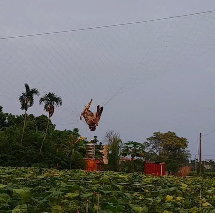 花蓮吉安有民眾設置捕鳥網,導致鳥類被困住。圖/翻攝臉書花蓮爆料王