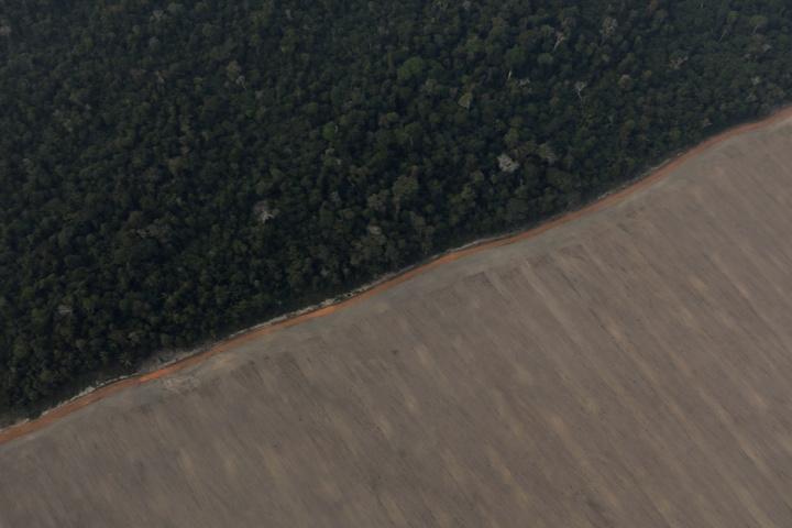 巴西亞馬遜熱帶雨林,一條產業道路隔著兩個截然不同的世界;一邊是蒼鬱茂密的樹林,另一邊則是遭大火焚毀殆盡,呈現一片死灰色的農用地。路透