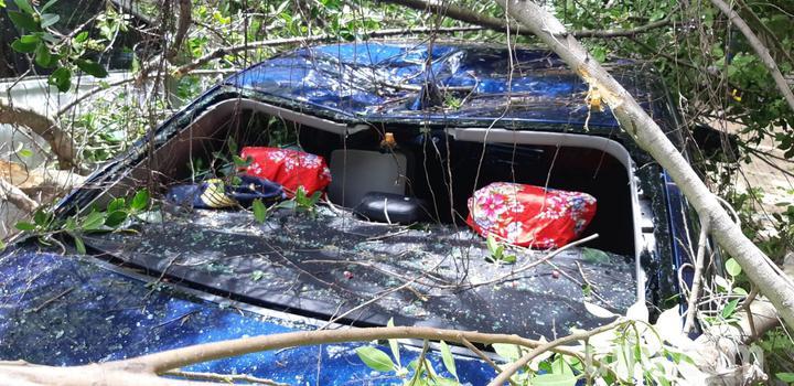 輕度颱風「白鹿」快閃台灣,北台灣昨天出現間歇風雨,傳出台北市一處停車場老樹倒塌,壓毀資深藝人楊慶煌在內的3名車主愛車。圖/讀者提供