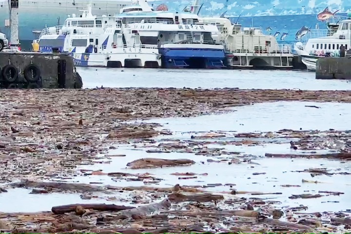 白鹿颱風後,今天台東沿海又見漂流木堆積岸際,甚至漂進富岡漁港內。記者羅紹平/攝影