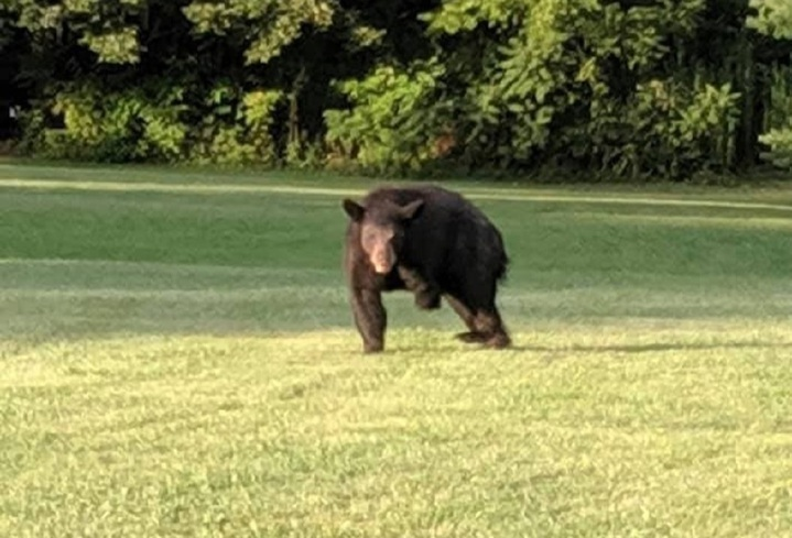 美國北卡羅來納州西部一帶近期屢傳有人目擊「三腳黑熊」蹣跚而行,至今已有9個獲得證實的通報案例。主管單位的專家認為原因出在熊被車撞,動保團體則把矛頭指向可能有人安放捕熊陷阱。Facebook/Help Asheville Bears