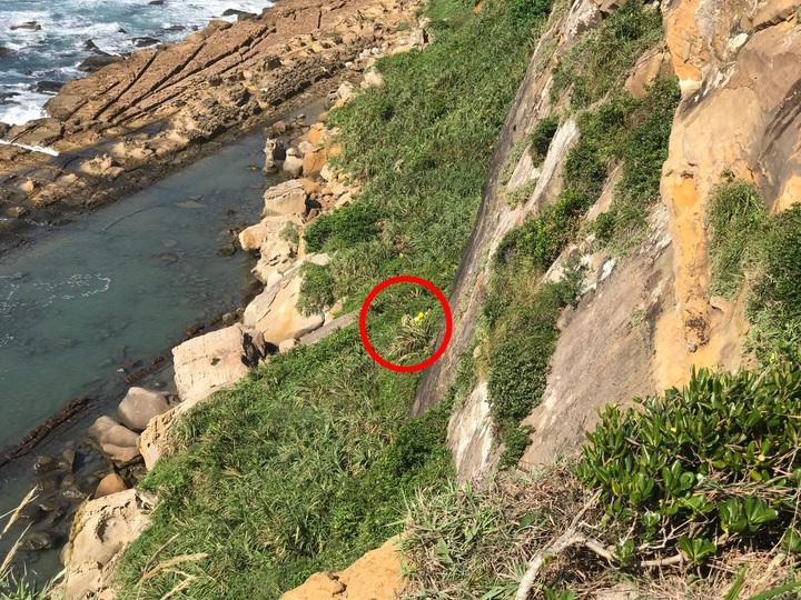 野柳地質公園崖底發現男屍,崖深30公尺吊掛困難。記者游明煌/翻攝