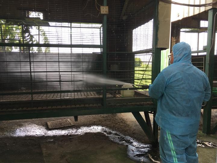 彰化縣首見民眾在住家庭院自養的鵝感染H5N2亞型高病原性禽流感,防疫人員到民眾住處撲殺後消毒。照片/動防所提供