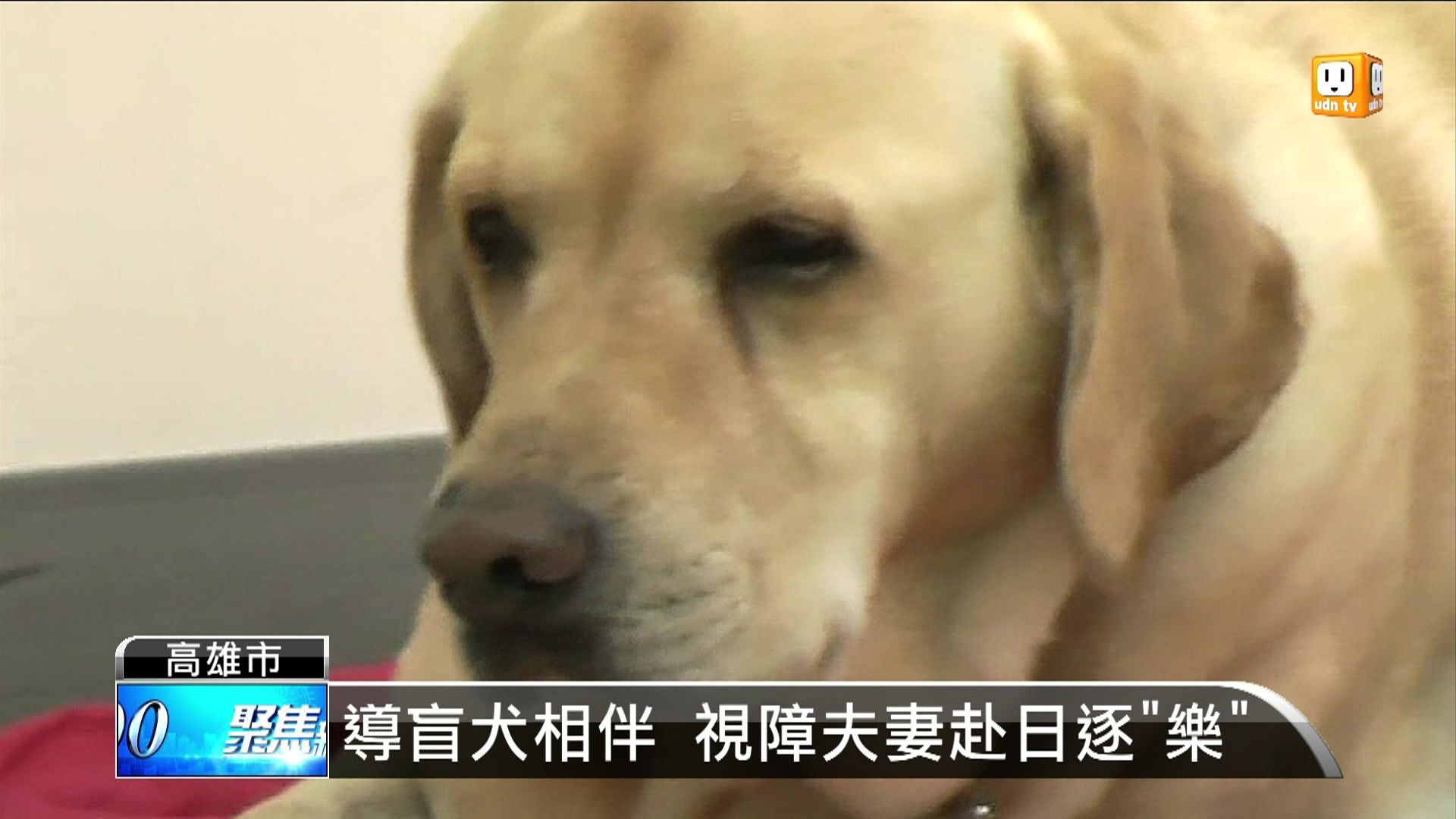 導盲犬相伴 視障夫妻赴日逐